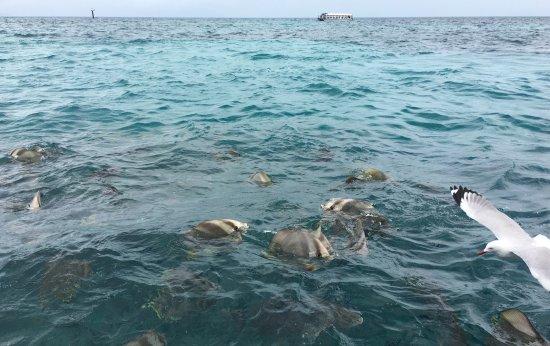 Green Island Cruise - Day Tour (Big Cat Green Island Reef Cruise): photo7.jpg