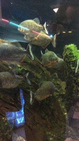 Seaport Aquarium: photo5.jpg
