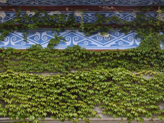Jingzhou, China: Vine