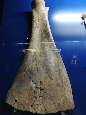 Yin Dynasty Ruins: Oracle bone on ox scapula
