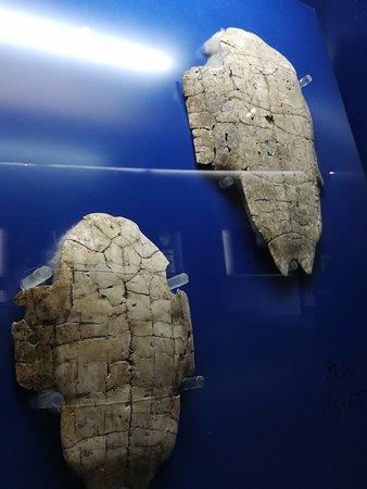 Yin Dynasty Ruins: Oracle bone on turtle plastron