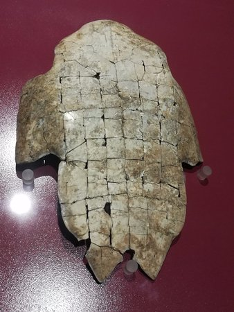 Yin Dynasty Ruins : Oracle bone on turtle plastron