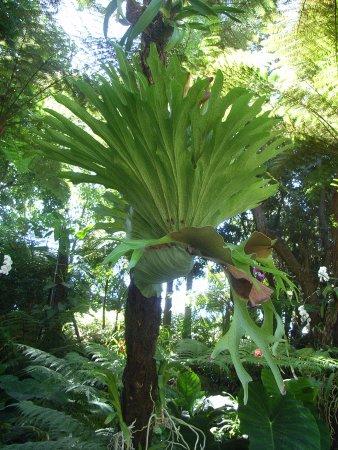 Giardino La Mortella Orchidea Gigante Foto Di Giardini La