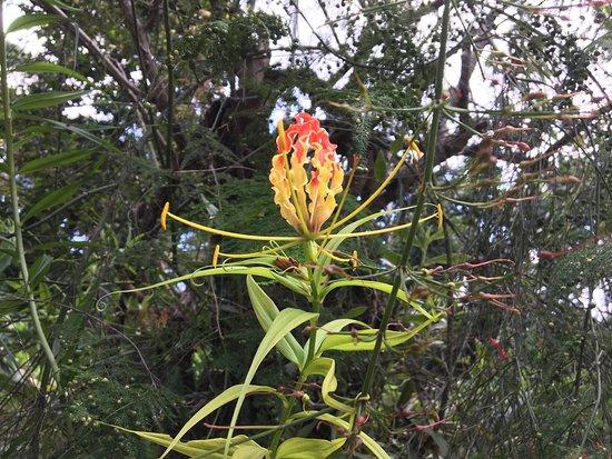 Abraham's Spice Garden: photo2.jpg