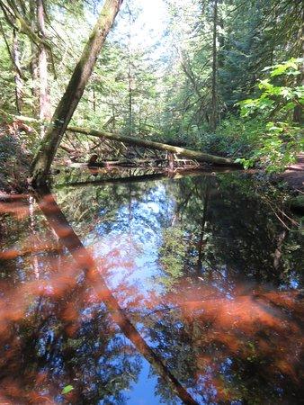 North Saanich, Kanada: The lake