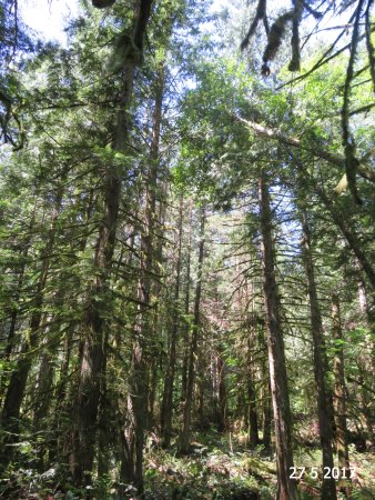 North Saanich, Canada: The tall timbers