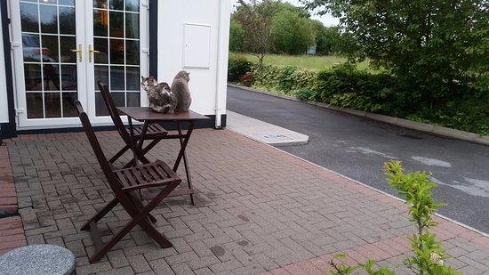 Tailors Lodge: Die Hauskatzen auf ihrem Stammplatz