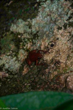 Bucus Tours : (not) Blue jean frog