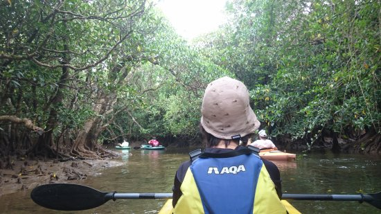 Sangojaya : シュノーケルとマングローブカヌーに参加しました。初めてのカヌーとシュノーケルでしたが、ガイドの原さん夫妻の丁寧なレクチャーで素晴らしい体験ができました。カヌーのあとはマングローブの干潟を散策