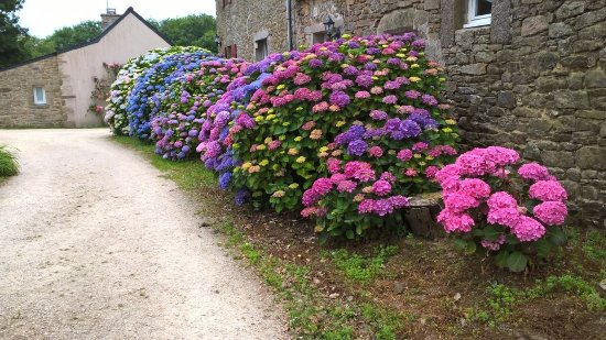 Guisseny, France : The flowery drive to the annex car park