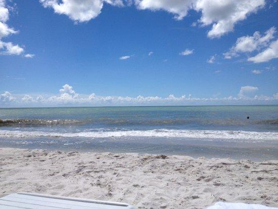 Hilton Marco Island Beach Resort : Playa del Hotel Hilton