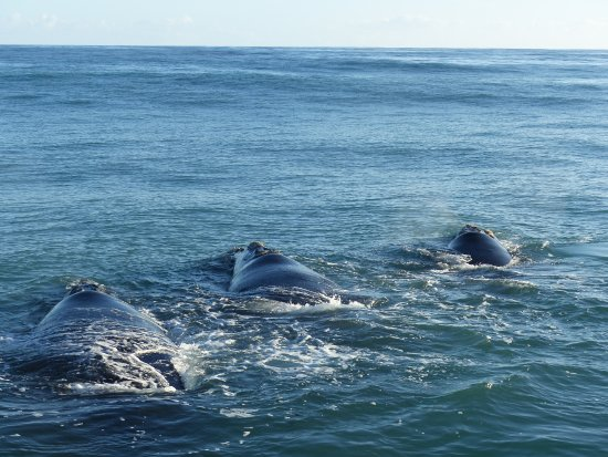 Hermanus, Afrika Selatan: 3 baleines vues depuis le bateau