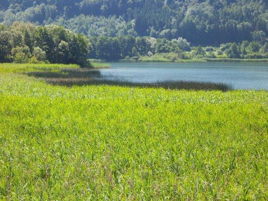 Steindorf, Austria: von See der zugang zum Moor