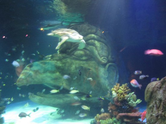 Giant Swimming In Water Picture Of Sea Life Orlando