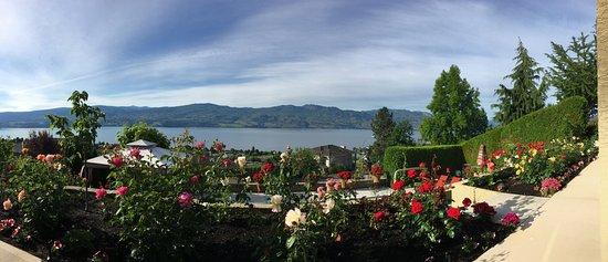 Bella Luna bed and breakfast: Bella Luna roses garden