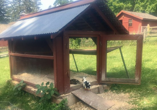 Morristown, NJ: One of the chicken coops