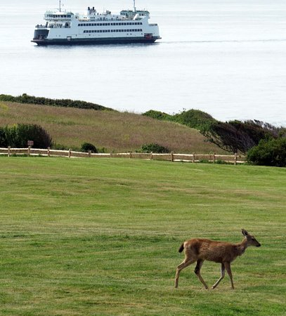 Coupeville, WA: View from Fort Casey State Park