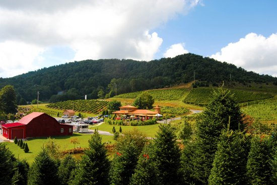 Linville Falls Winery: We have great views on our 40 acre farm. Have a glass of award winning wine and explore the grou
