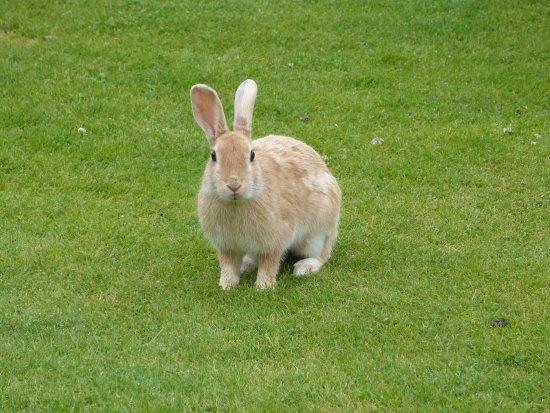 Huntly, UK : Unusual cloured ribbits