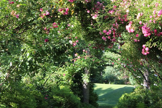 East Hampton, NY: The Pink Garden in bloom in June, looking toward the Amphitheater.