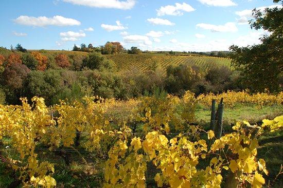 Beaulieu-sur-Layon, France: Chaume en automne