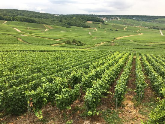 Paris Wine Day Tours Stunning French Countryside In Champagne