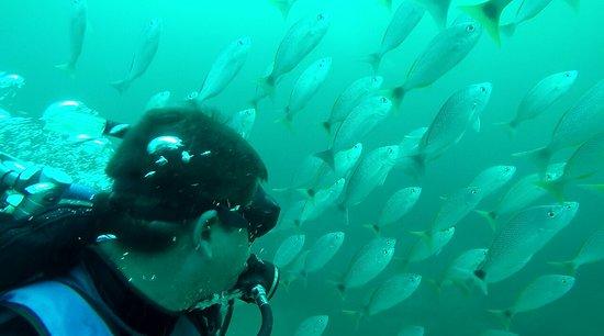 Drake Bay, Costa Rica: 373F446E431746C5E4941F5894EBCF1D_large.jpg