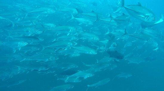 Drake Bay, Costa Rica: 1D1072B620655398ABA66DFC18E4879D_large.jpg