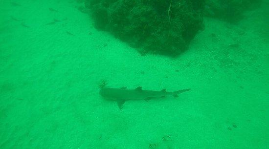 Drake Bay, Costa Rica: 04BD95401003047981844A316611D8BB_large.jpg
