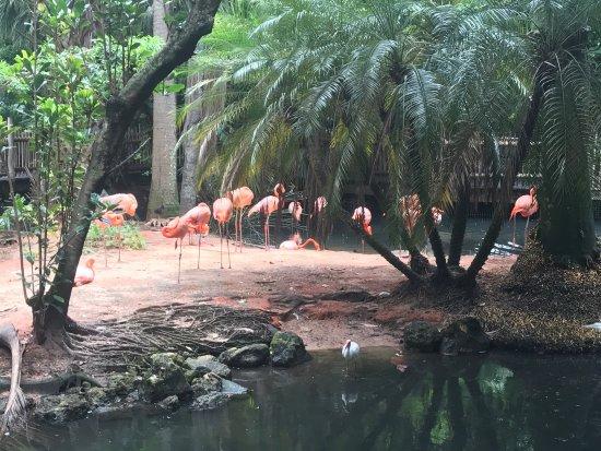 Palm Beach Zoo & Conservation Society : photo0.jpg