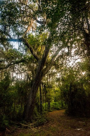 Micanopy, Floride : Hiking trail