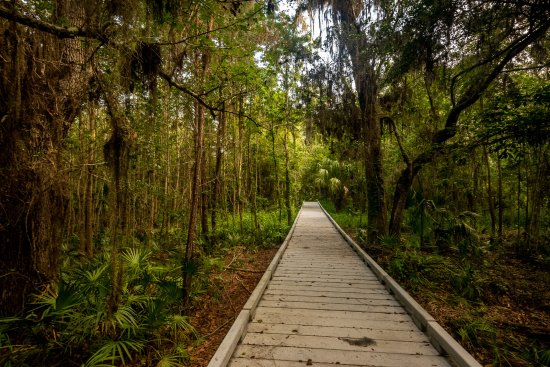 Micanopy, Floride : Beginning of hiking trail