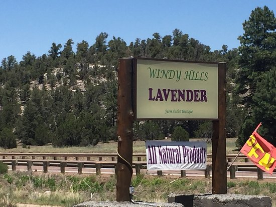 Heber, AZ: I highly recommend this place for all lavender lovers!