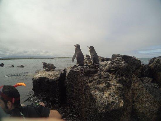 Puerto Villamil, Ecuador: IMG-20170621-WA0014_large.jpg