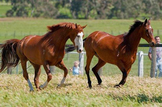 Living Legends Champion Racehorse...