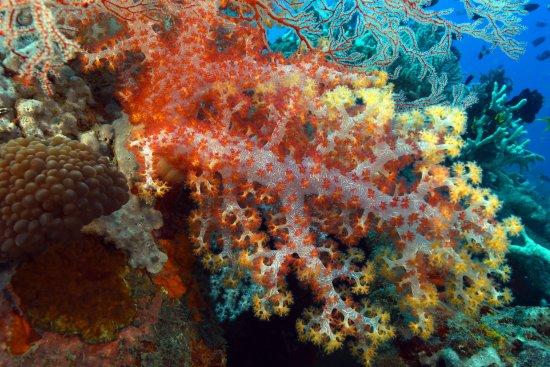 Solomon Islands: Bright Coral in Munda