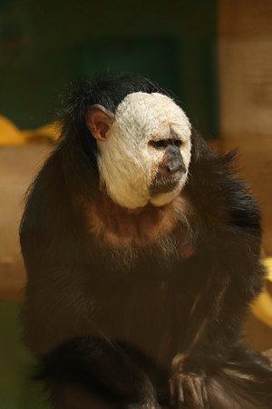 Red River Zoo: photo3.jpg
