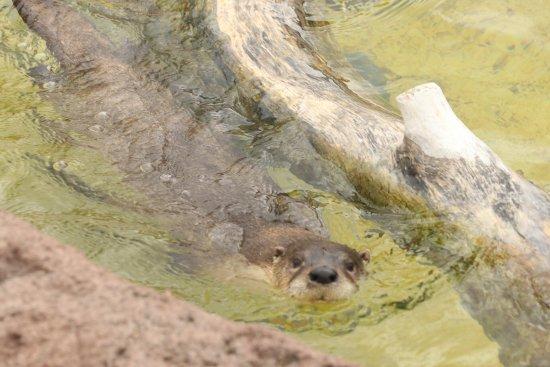 Red River Zoo: photo4.jpg