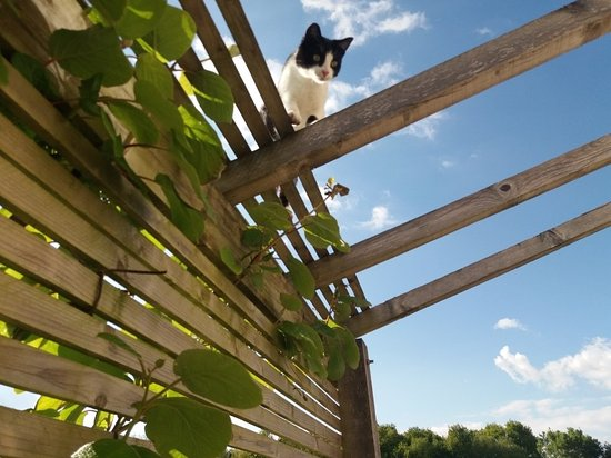 Le Grand-Pressigny, France: Blue sky, sunshine, relax, oh & meet the resident cat!