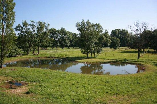 Chateau de Beau Site: Etang
