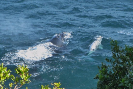Bishop's Cove: Whales viewed from the terrace