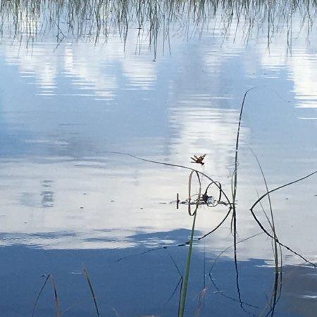 Weston, FL: photo0.jpg