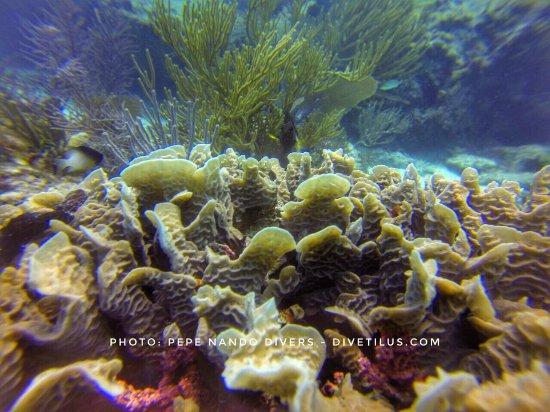 Divetilus Dive Center : Buceando en Playa del Carmen Junio 2017