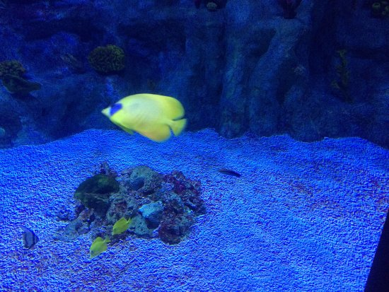 Roquetas de Mar Aquarium