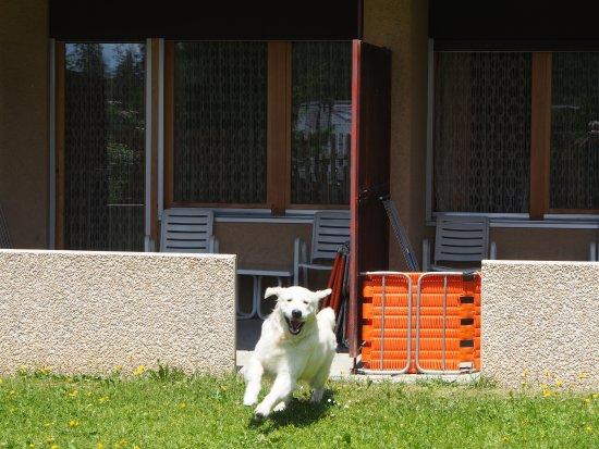 Hotel Valaisia: Zimmer mit Gartenzugang