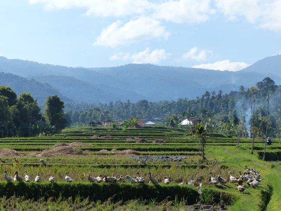 Atres Villa Homestay: rizière