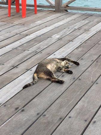 Semporna, Μαλαισία: Resident meow