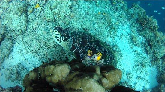 Semporna, Μαλαισία: Hello turtle!