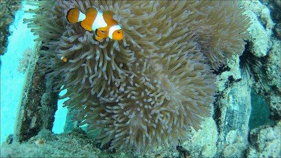 Semporna, Μαλαισία: Nemo!