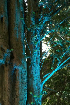 Mülheim an der Ruhr, Tyskland: Beleuchtete Bäume außerhalb des Parks